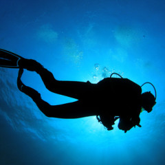 Seiko Divers Watches