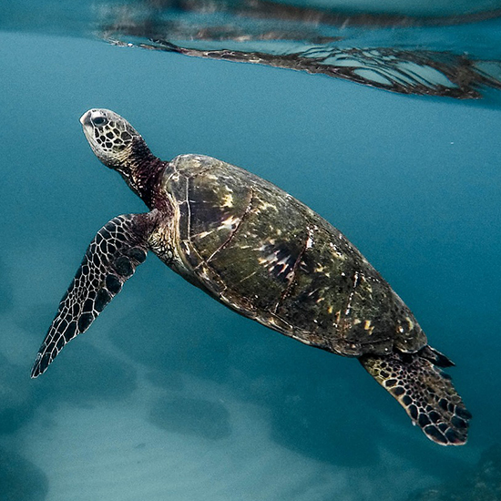 world turtle day thumbnail