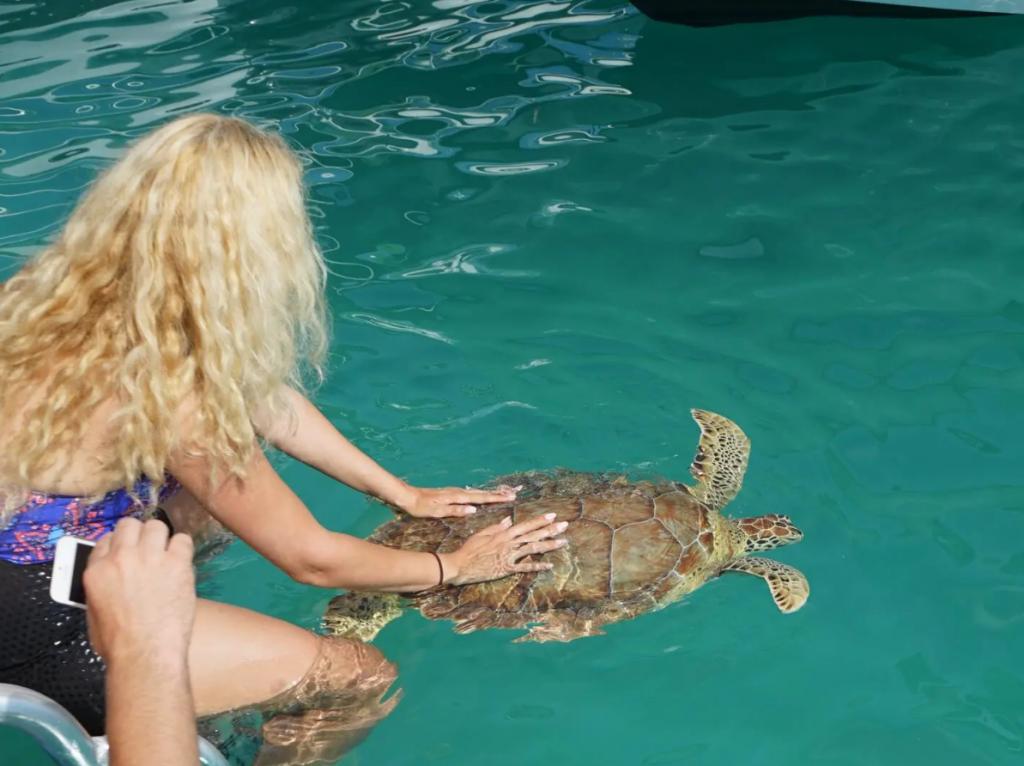 certina turtles